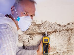 Mold Remediation Long Island.jpg