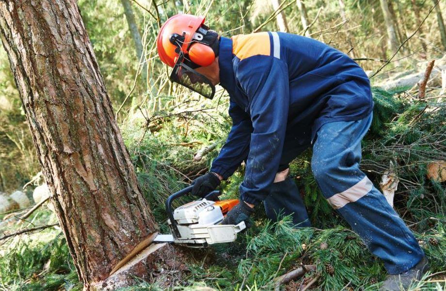 treecutting-sebring.jpg