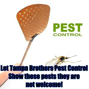 Tampa Brothers Pest Control.jpg