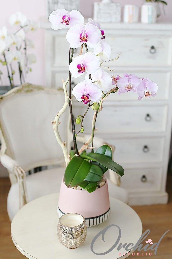 Santa-Ana-Orchids-Arrangement_1024x1024.jpg