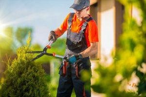 glasgow-trees-pruning-maintenance-1_orig - Copy.jpg