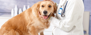Veterinarian for dog.png