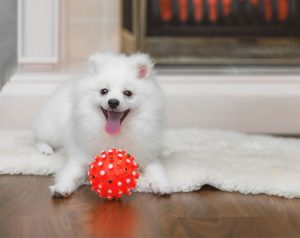 dog-playing-with-toy.jpg