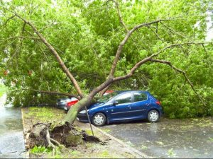emergency-tree-services-pro-vallejo_3.jpg