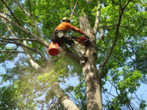 Tree Trimming.jpg