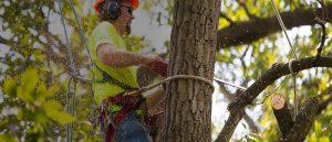 Bronx tree removal.jpg