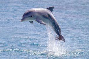Wild Dolphin 720x480 (1).jpg
