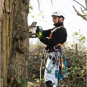00 logo Tree Service Stamford – Copy