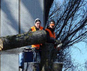 01 cover Tree Service Stamford - Copy.jpg