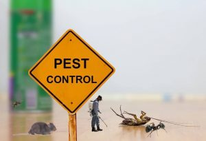 Pest-Control-services-in-dhaka.jpg