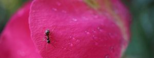 ant-5235935_1920.jpg
