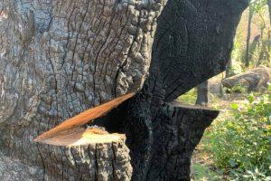 tree_removal_hayward_ca-orx404glzoxkm6kodue2xxzz062fywq6cv8mnlve8g.jpg