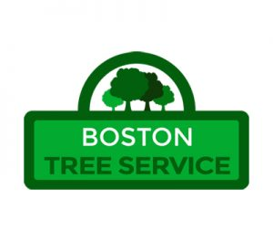 Boston-Tree-Service.jpg