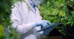 medical-marijuana.jpeg